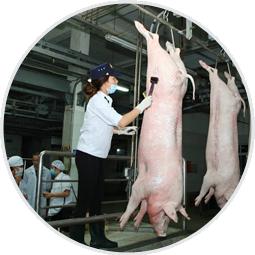 giết mổ thịt heo hữu cơ auaufarm
